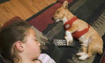 Hows Pets Affect Indoor Air Quality